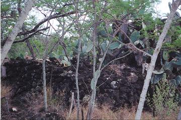 Heiau (Temple) Remains in Makena