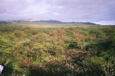 Native Dryland Forest